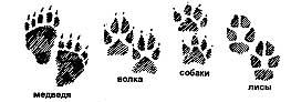 Следы животных