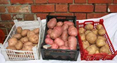 Хранение овощей в городской квартире. Делаем запасы.
