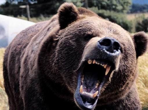 Как защититься от медведя