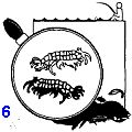 Наживка, самодельные блесны, место и время для рыбной ловли